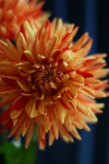 webpicP-AS-2012-flowers-nn-web480w720h.png